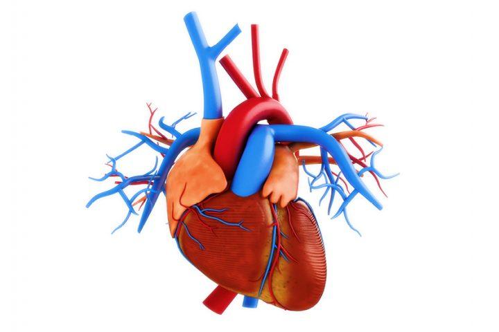 100 fakti par sirdi un sirds veselību